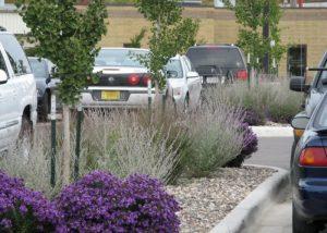 Gundersen Lutheran Parking Lot Landscaping